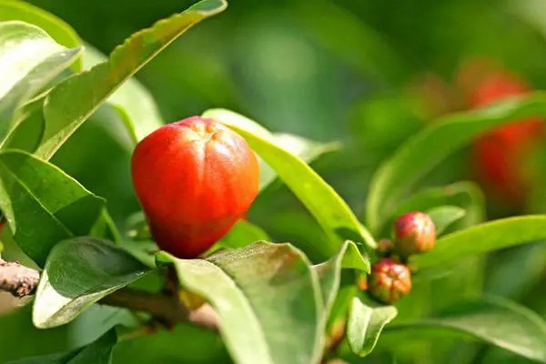 這些植物都能殺死細菌、真菌的揮發物質,還不快種幾盆