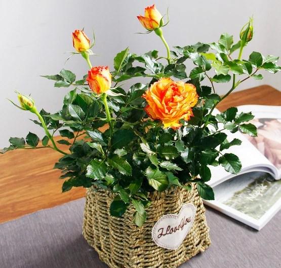 陽台春意濃,不可錯過的10種開花植物
