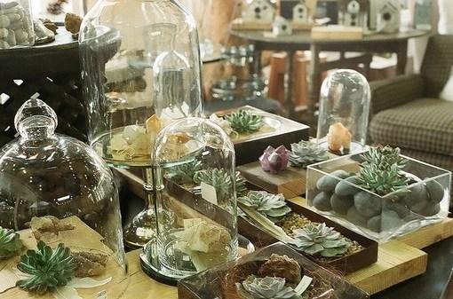 在養殖多肉植物時要注意的方法及注意事項 揭哪些植物是多肉植物