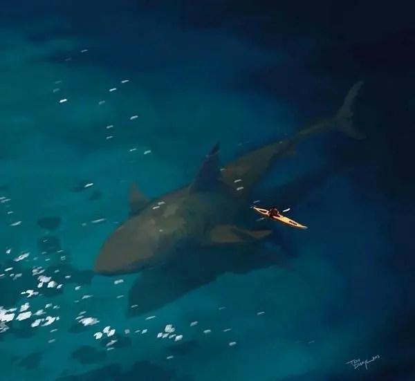 關於鯊魚的20個冷知識,你知道嗎!