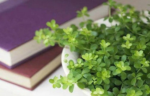 經驗分享:把這「2種」東西當花肥後,幾十年沒買過花肥!