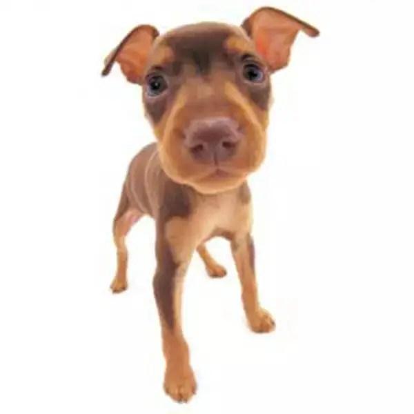 世界名犬們的滿月照,被汪星人的大臉萌化了……