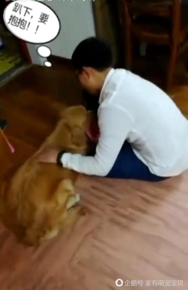 主人出差四個月才回家,推門一瞬間看到狗狗的樣子,主人都要哭了