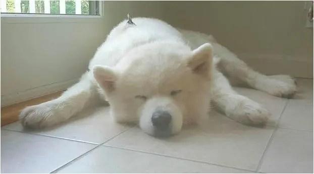 狗狗夫妻各自從狗肉工廠被救出後再次重逢,真的讓人感動的爆哭!