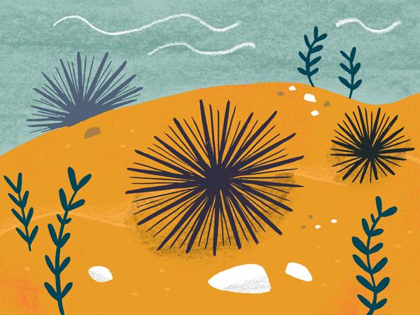 Seaport San Diego urchin