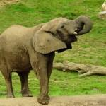offre comité d'entreprise- magazine influence!ce- zoo de beauval offre pour les comités d'entreprises-3