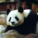 offre comité d'entreprise- magazine influence!ce- zoo de beauval offre pour les comités d'entreprises-5
