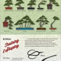 Bonsai Trees for Dummies