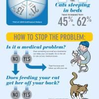 Cat Sleep Habits