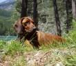 Na dovolenou do českých lesů a hájů i se psem