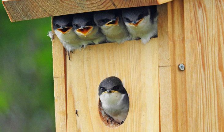 La SHEP vous invite à percer le mystère des oiseaux migrateurs