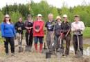 Restauration du marécage de Grondines : des bénévoles mettent la main à la terre