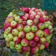 6452_g_anyksc-obuolys