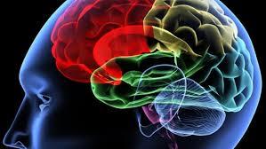 brainsharp