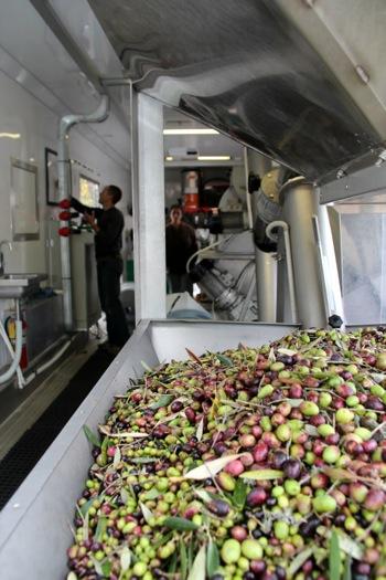 olive press at Sacred Heart Schools