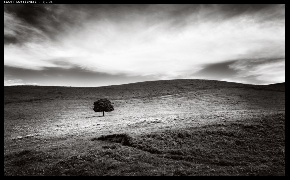 Lone Tree - Parker Ranch - 2013