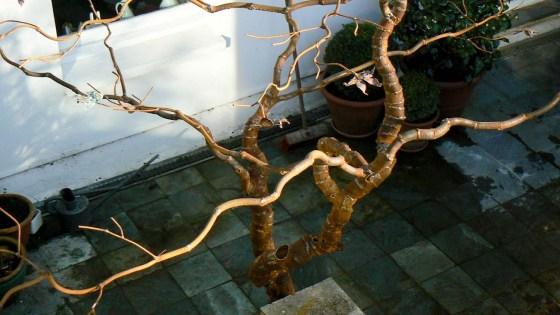 steel_tree-3