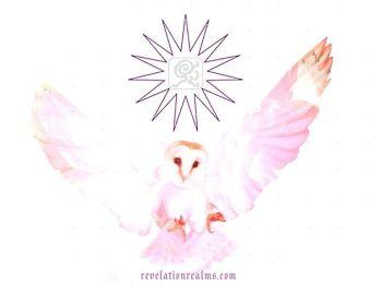 phoebe owl GM