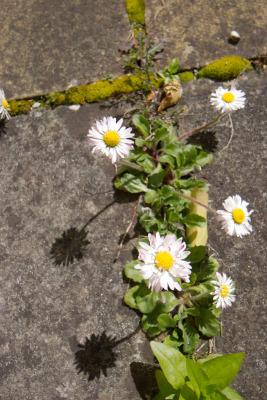 2008-04-20_blarney_27