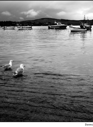 birds-of-schull