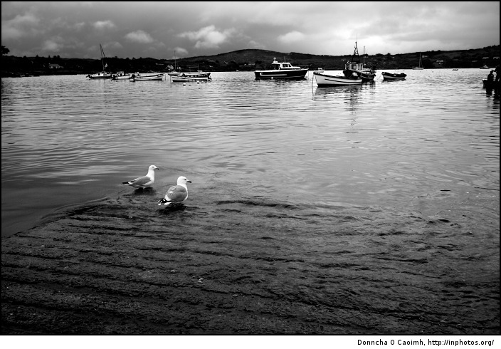 birds of schull