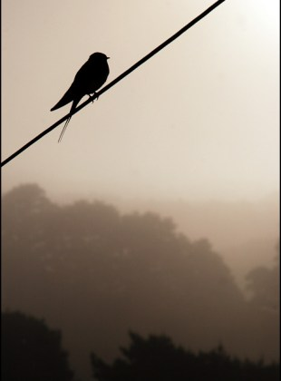 bird_on_a_misty_morning
