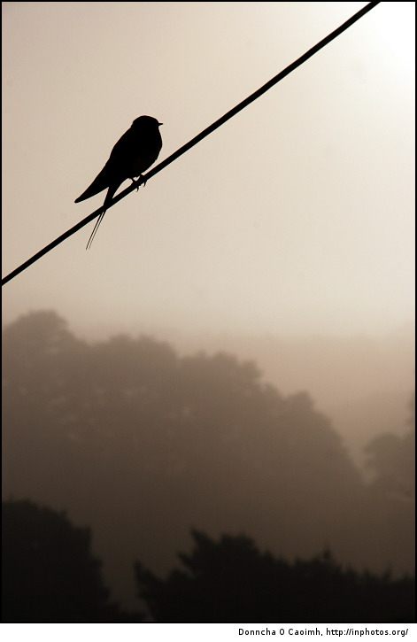 Misty Morning Bird