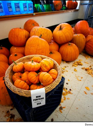 pumpkins-for-sale