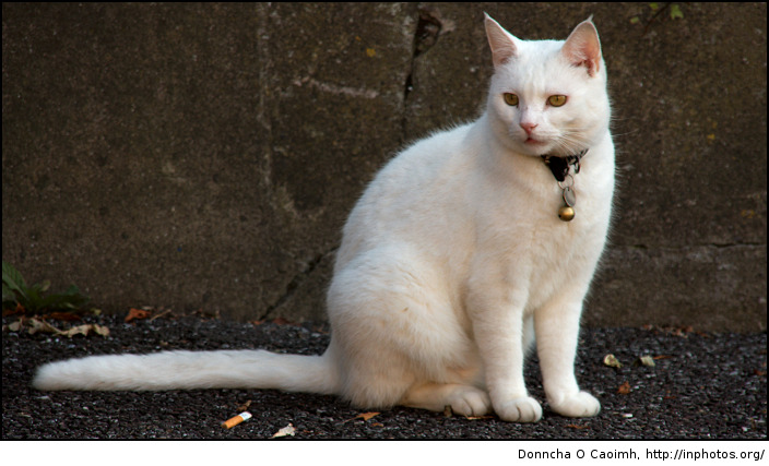 Patricks Hill Cat