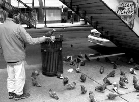 Please don't feed the pigeons
