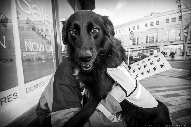 Mountain Rescue Dog