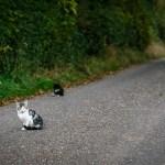 North Cork Kittens