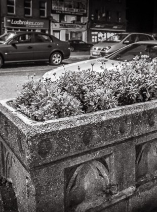 Horse Trough in Parnell Place