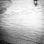 horse-on-inchydoney-beach