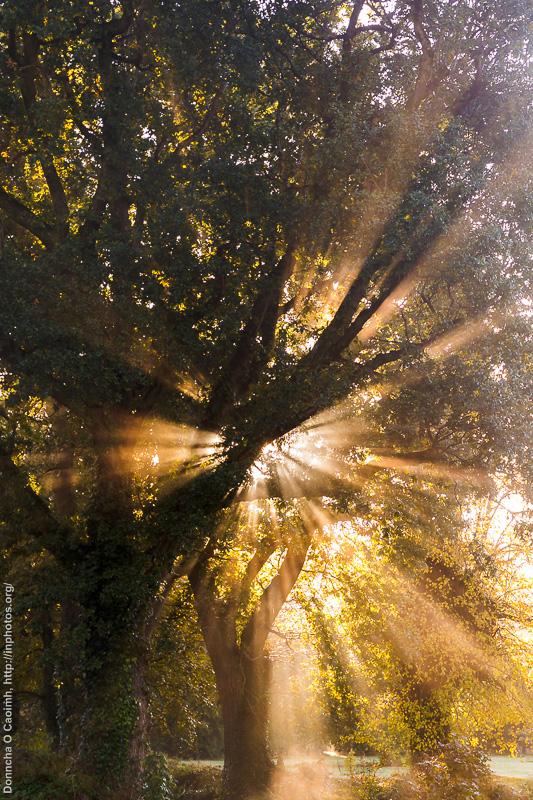 Sunlight through trees