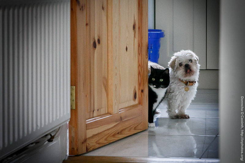 Hoppy and Oscar