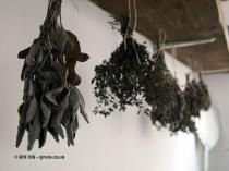 Herbs hanging at Fish in a Day, Food Safari