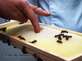 Tasting honey in comb, Graanmarkt 13, Antwerp, Belgium