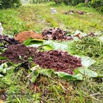 Compost ingredients, Loma Sotavento Cacao plantation, Dominican Republic