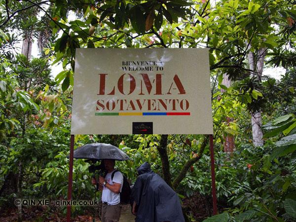Loma Sotavento Cacao plantation, Dominican Republic