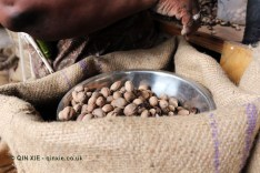 Nutmeg without shells, Gouyave nutmeg factory, Grenada
