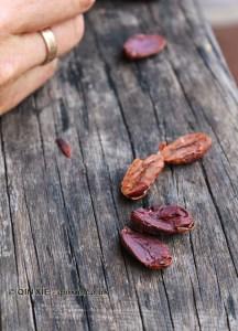 Open cocoa beans, Crayfish Bay, Grenada