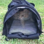 The SturdiBag Pet Carrier Makes Carrying Your Furbabies Comfy For Them and Easy For You