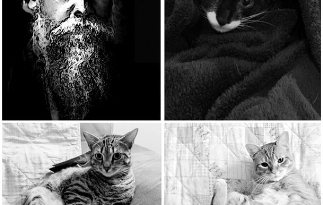 Rabindranath Tagore (L); Tonks, my sister's cat (R)