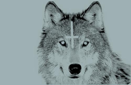 animal-art-beautiful-cross-cute-Favim.com-306573