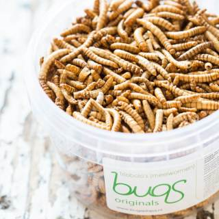 Would you eat insects if all else was gone? | insimoneskitchen.com