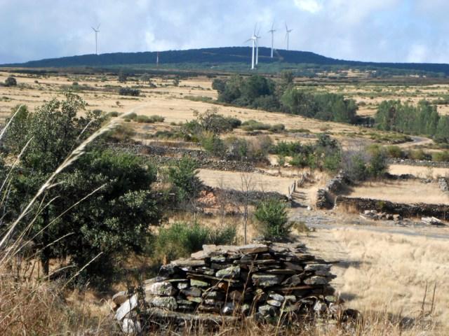 eolicos_insitu_2013_P035 Espigas eolicas
