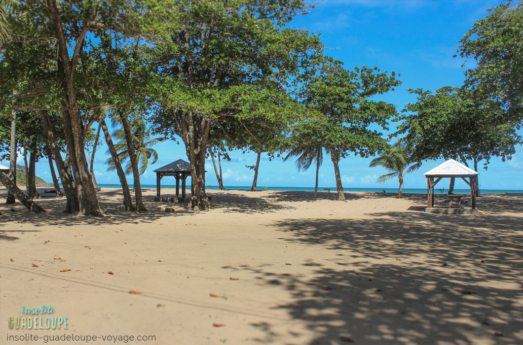 plage-des-amandiers-guadeloupe-sable-fin-ombre-belle-basse-terre-carbet-pique-nique