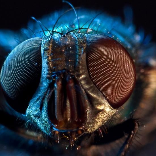 Macro Fly Photography