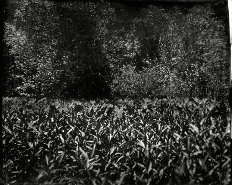 Film Photography13